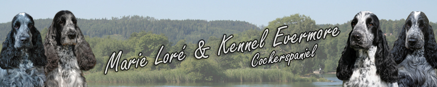 Welcome to Kennel Evermore and Marie Loré, we hope you will enjoy your visit here!
